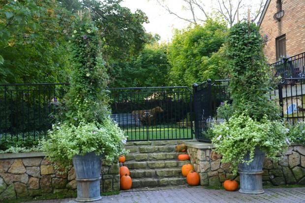 October-garden.jpg