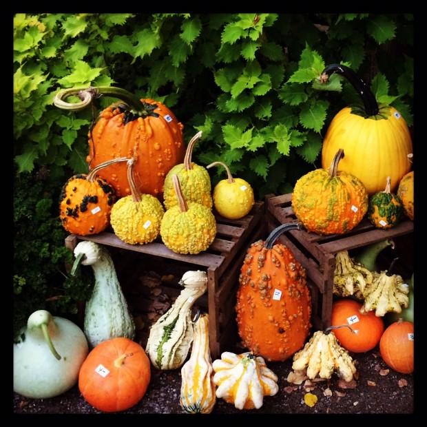 pumpkins 2015 (8)